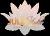 Julia beauty & SPA