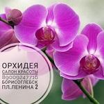 """Компания """"Орхидея"""""""